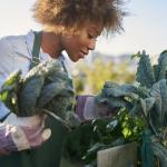 L'ANRU récompense la CALL pour un projet portant sur l'agriculture urbaine